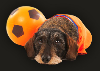 Dachshund with a ball